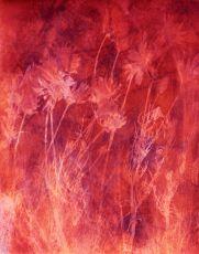 Chamomilla I by Mirian Jacobs