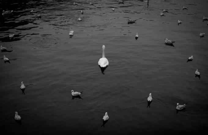Amstel by Julie Hrudova