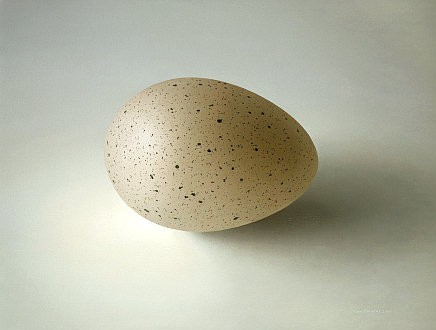 Big Eurasian Coot egg by Olav Cleofas van Overbeek