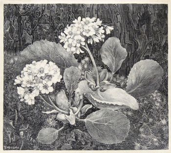 Primula in the moss by Theo van Hoytema
