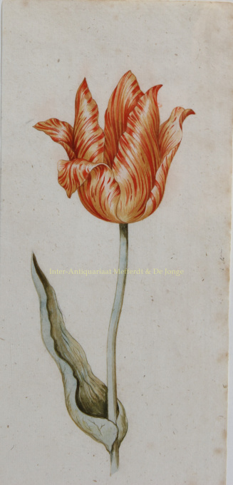 Tulips  by Unknown Artist