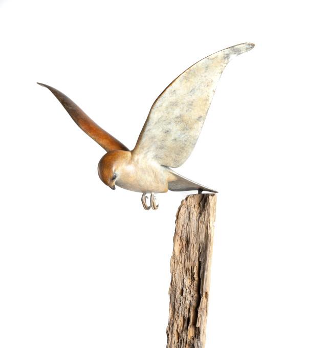 Falcon prey by Mark Dedrie