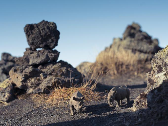 Black Rhinoceros Laufskalavarda Iceland by Erik Hijweege