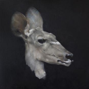 Antilope Head by Justin Coburn