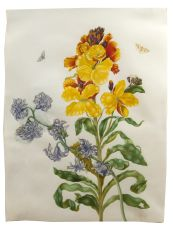 Flower watercolour with moths, larvae and pupae, by the daughter of Maria Sibylla Merian