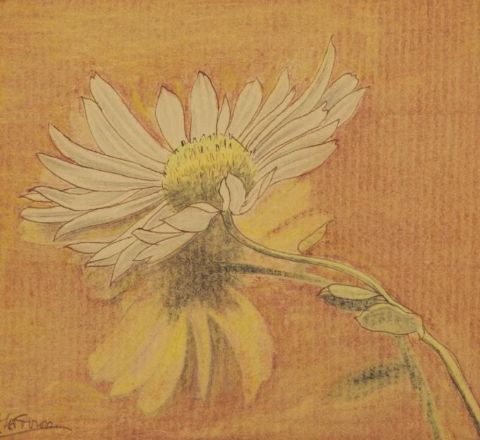 Daisy by Jan Toorop