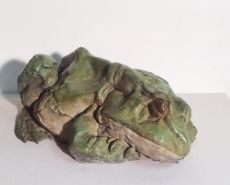 Sleeping frog by Pieter Van den Daele