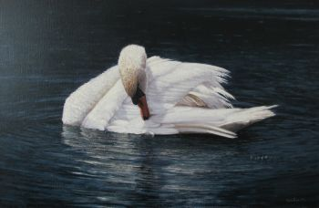 Swan cleaning feathers by Wouter van Soest