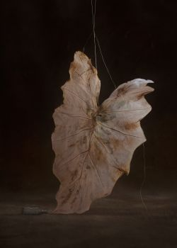 Still here - Expectation by Suzanne Jongmans