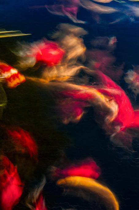 Lampions by Hetty van Oordt