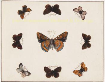 vlindertekeningen  by Benard, Robert