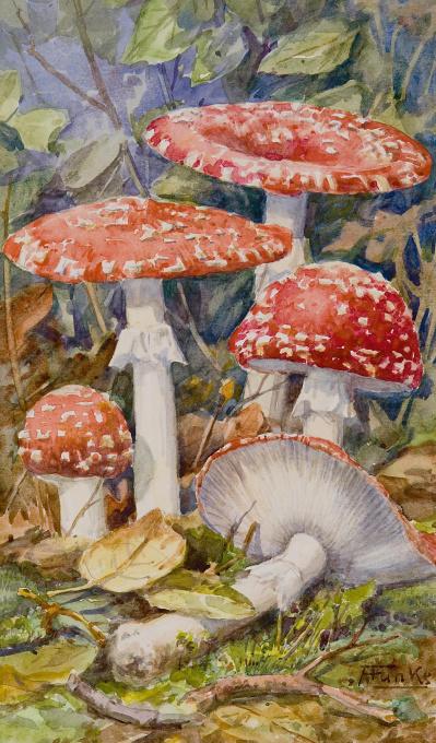 Mushrooms by Anton Funke