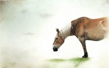 Half Paard by Francisco Roa