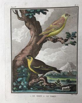 L'histoire naturelle des oiseaux: 20 engravings depicting birds by Georges-Louis Leclerc, Comte de Buffon