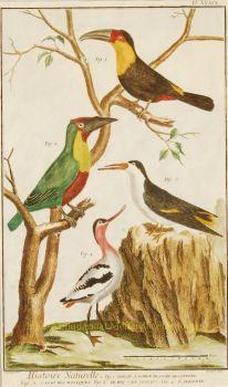 Exotische vogels uit Encyclopedie de Diderot et d'Alembert  by Guida, John