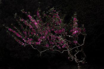 Peach Tree by Shen Wei
