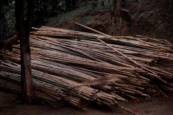 Bamboo by Shen Wei