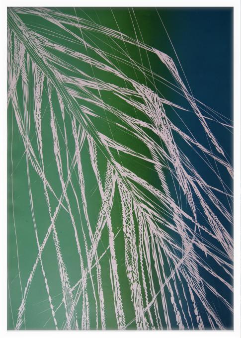 Botanic Garden II by Magdalena Chmielek