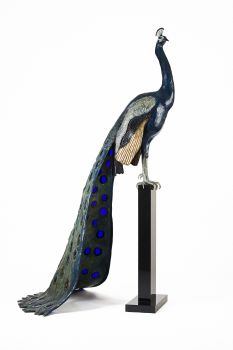 Pauw by Madeleine van der Knoop